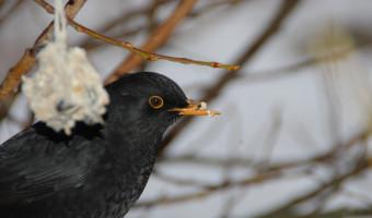 Juliette Linossier : Quand le chant des oiseaux révèle ce que nous sommes