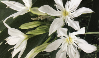 Flore de Corse : Une Ile aux trésors